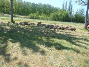 Camp des 3 ptits cochons